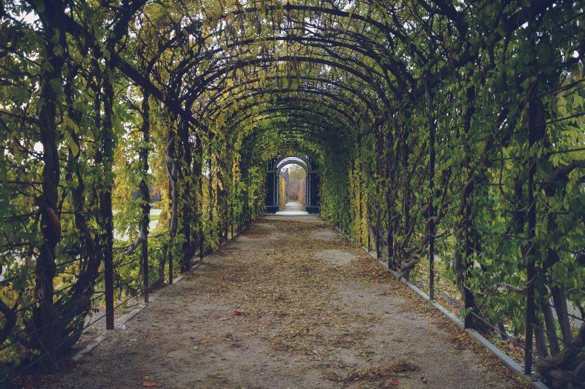 bindweed-corridor-foliage-59599